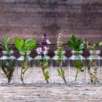 7 přírodních cest, které odpudí komáry
