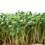 Jak pěstovat bylinky v bytě