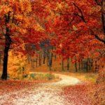 Podzimní dekorace 3x jinak – vyrobte si sami