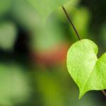 8 nápadů na ekologické, zelené dárky k Valentýnu